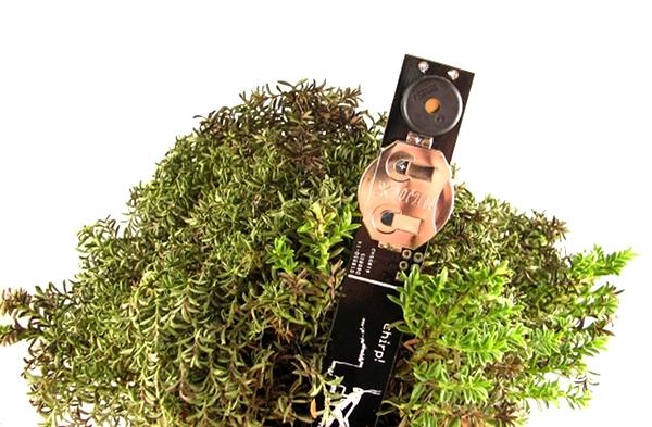 plant watering alarm